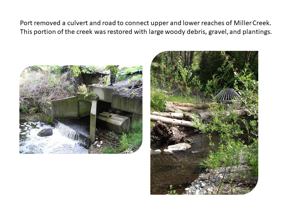 Port removed a culvert and road to connect upper and lower reaches of Miller Creek. This portion of the creek was restored with large woody debris, gravel, and plantings.