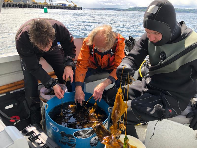 Scientists look at kelp in a boat