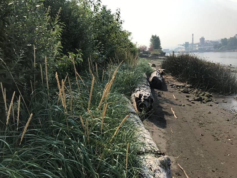 Restored Estuary Habitat on the Duwamish Waterway